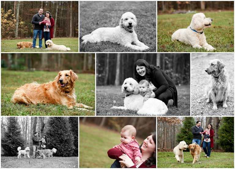 Fluvanna Family Fall Portraits at Home palmyra photographer photography photoshoot pictures golden goldendoodle first christmas charlottesville cville